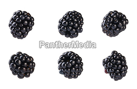 collection of fresh blackberries