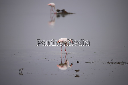 two flamingos and some other birds