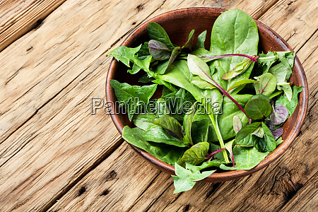 green herbs mix salad