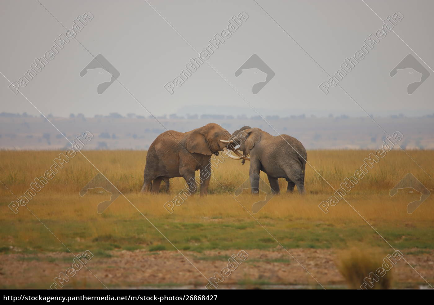 duel, of, two, elephants - 26868427