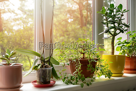 potted indoor plants on sunny home