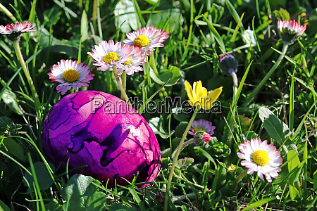 a pink easter egg between daisies