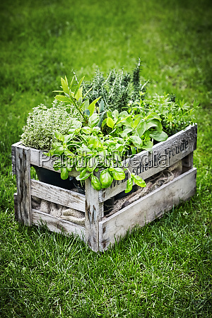 old wooden wine crate filled with