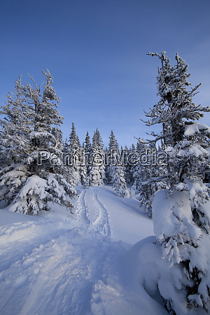 tracks and trees on snowy hillside