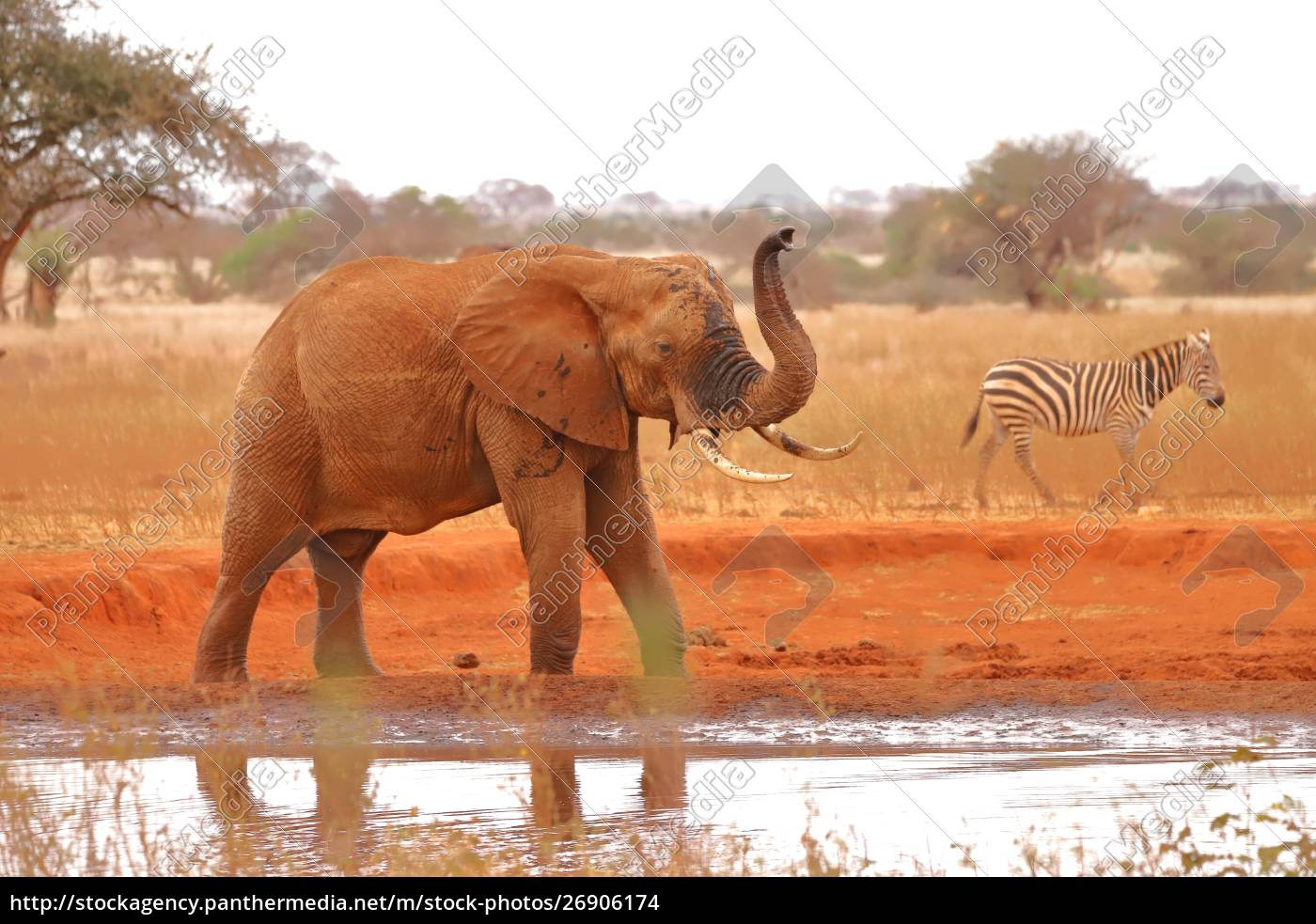 an, elephant, and, a, zebra, at - 26906174
