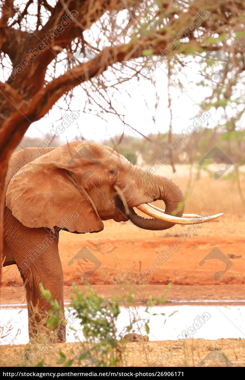 an, elephant, under, a, tree, beside - 26906171