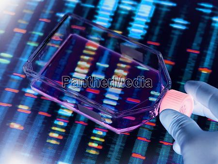 genetic engineering scientist viewing cells in