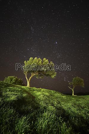 spanien cadaques olivenbaeume unter sternenhimmel