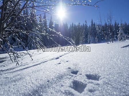 deutschland naturpark oberer bayerischer wald schneebedeckte