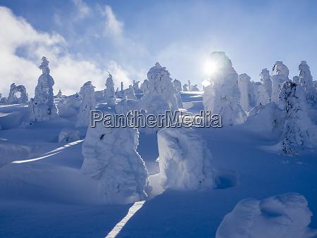 deutschland naturpark oberer bayerischer wald winterlandschaft