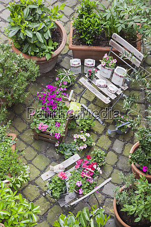 various potted spring and summer plants