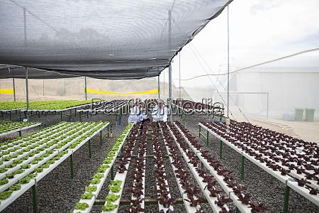 gewaechshausarbeiter inspizieren pflanzen
