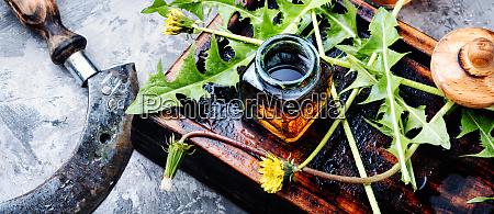 loewenzahnpflanze auf dem tisch