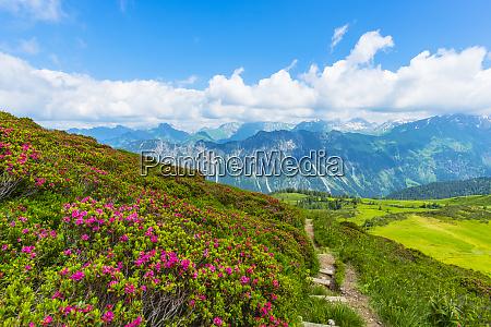 germany bavaria allgaeu allgaeu alps view