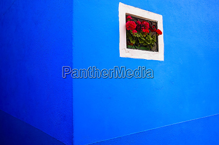 vibrant blue building with blossoming red
