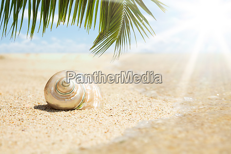 conch seashell on sand at beach