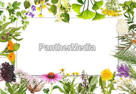 blank label with medical plants 2