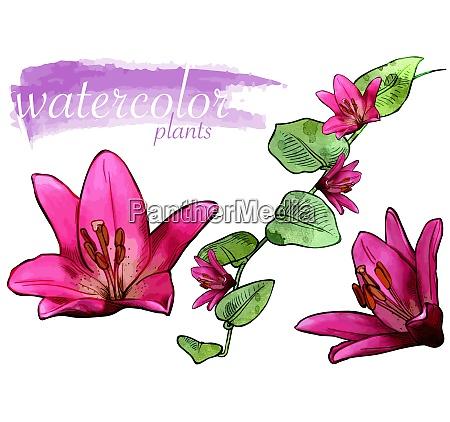 purple watercolor flower set
