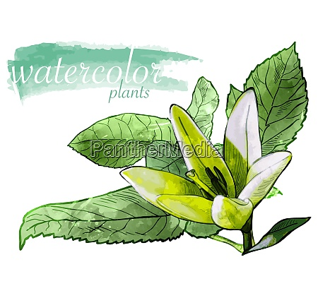 green watercolor flower with leafs