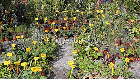 herbs and spices plants