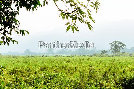 innenansicht des kaziranga nationalparks assam india