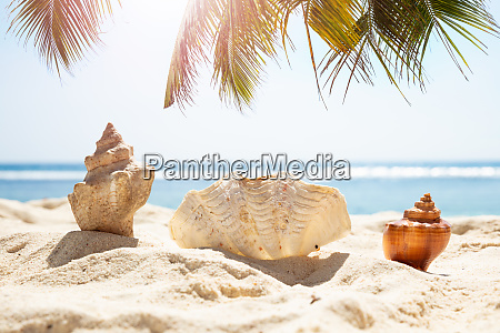 seashells in sand at beach