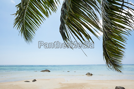 palm leaves near the idyllic beach