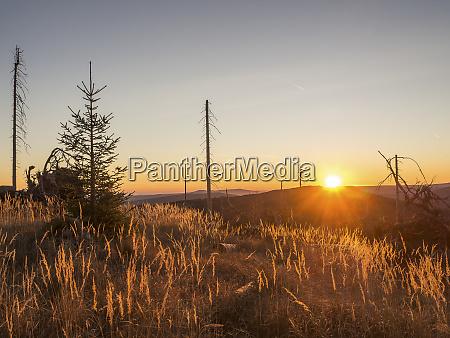 germany bavaria bavarian forest sunrise at