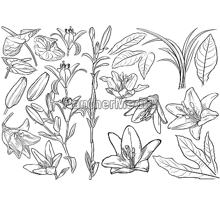 exotic flowers drawing set