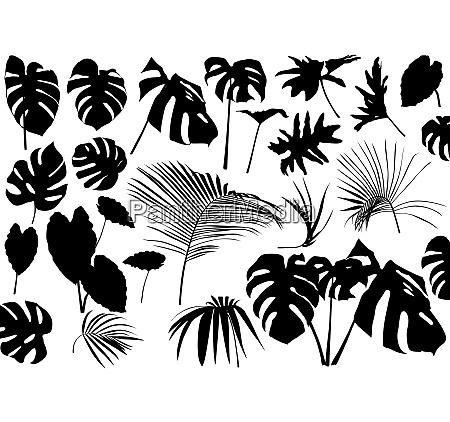 silhouetted tropical leaves