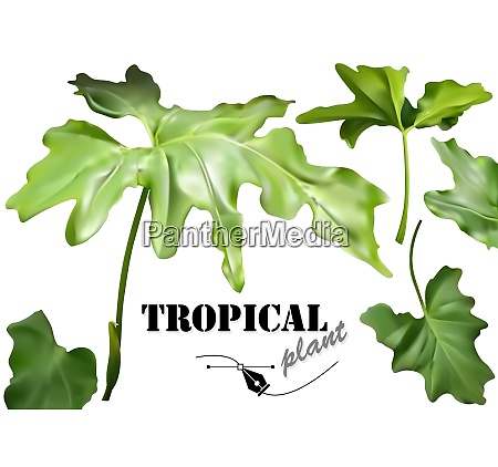 grüne, tropische, blätter, set - 27002100