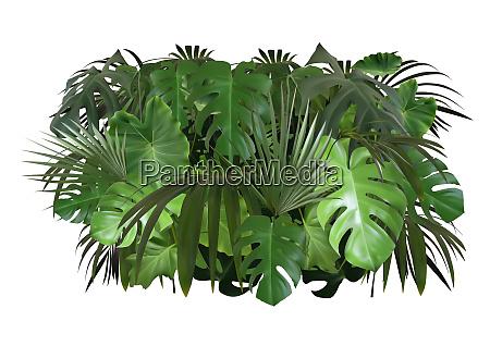 tropical leaves foliage arrangement