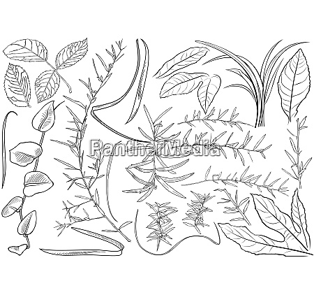 black and white plant leaves drawing
