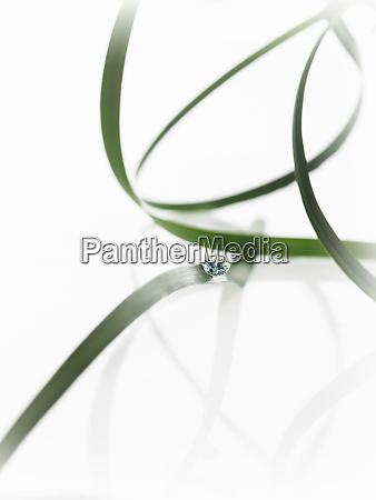 duenne band gruene blaetter oder blattstraehnen