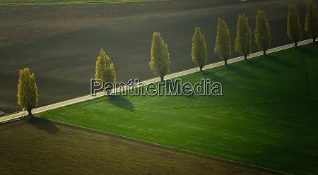 poplar lined road skagit valley washington