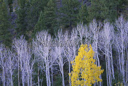 autumn in dixie national forest white
