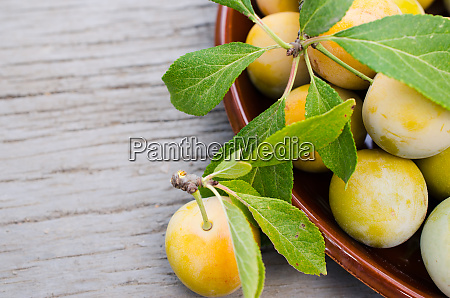 ecologically grown yellow plums in a