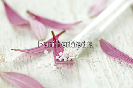 petals of purple coneflower and glass