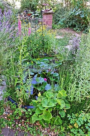 garden pond in the natural garden