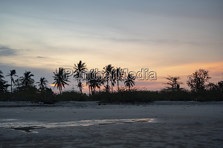 panorama kokosbaeume und baeume trennen den
