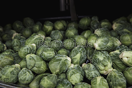 heap of brussels sprouts