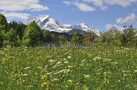frühlingswiese, bei, , garmisch-partenkirchen - 27066079
