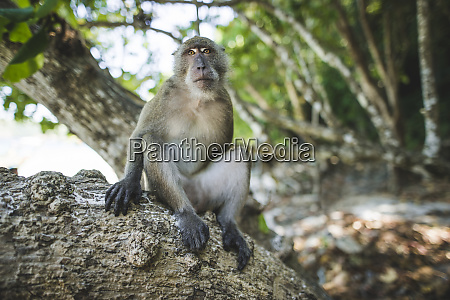 macaque sitting on rock