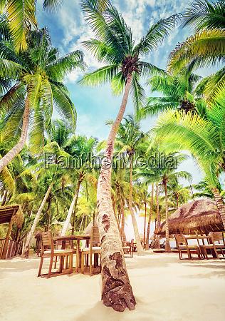 heller sonniger tag im luxurioesen tropischen