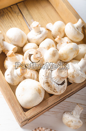 frische pilze reinigung