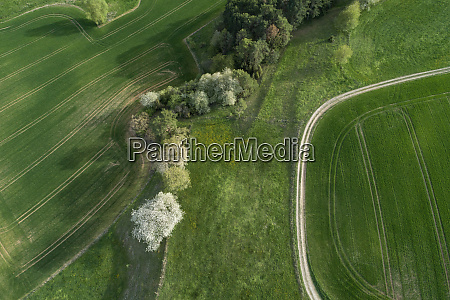 aerial view of dirt road through