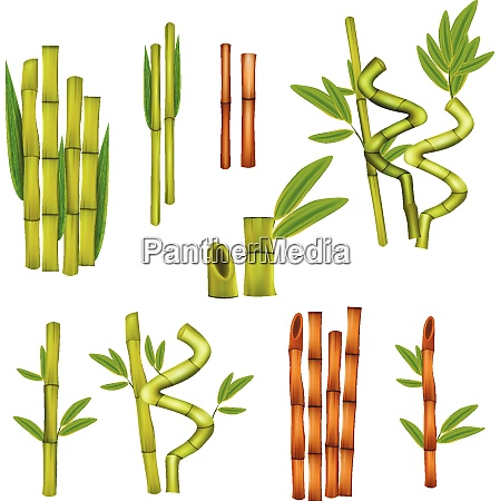 green bamboo decorative elements and warm