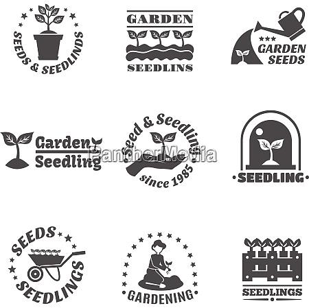 seedling landwirtschaft und garten schwarze saerung