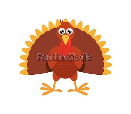 vector illustration of turkey bird cartoon