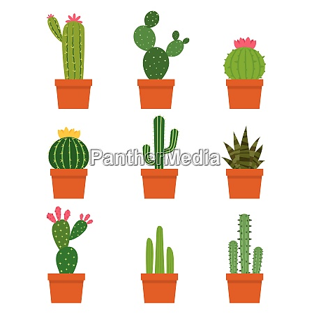 cactus plant collections vector set isolated